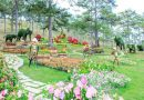 Vi vu ngày tết tại thành phố Đà Lạt thơ mộng