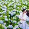 Top 3 cánh đồng hoa cẩm tú cầu nổi tiếng nhất Đà Lạt